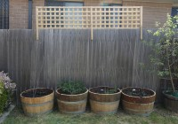 The four varieties of hops in the backyard